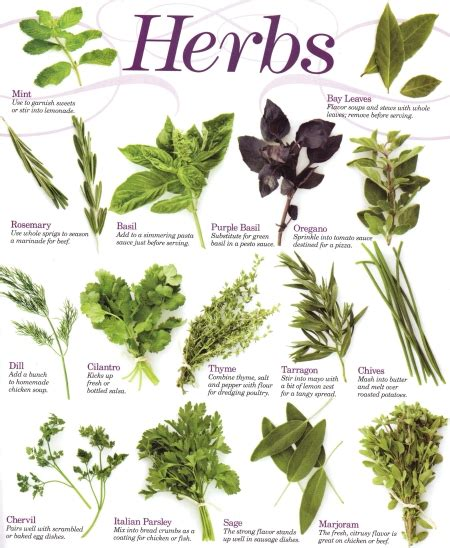 herbs plants pictures herbs