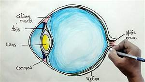How To Draw Human Eye Diagram For Beginners