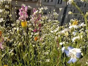 Fotoserie bienenfreundliche pflanzen okoleo umwelt und for Französischer balkon mit pflanzen für bienen im garten