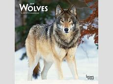 Wolves 2019 7 x 7 Inch Monthly Mini Wall Calendar