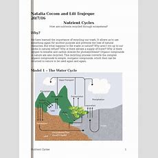 Nutrient Cycles Pogilnatalia  Carbon Dioxide  Carbon Dioxide In Earth's Atmosphere