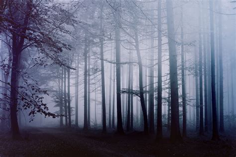 fog forest morning  hd nature  wallpapers images