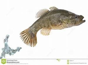 aquarium fish jumping out of water - image of fish jumping ...