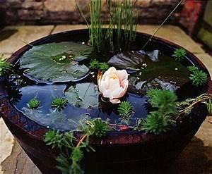 Jardin Aquatique En Pot. jardin aquatique en pot 20171006230339 ...
