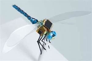DragonflEye Project Wants to Turn Insects Into Cyborg ...