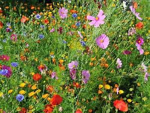 Blumen Im Garten : anna s welt blumen ~ Bigdaddyawards.com Haus und Dekorationen