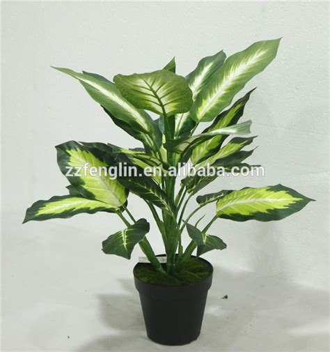 cheap indoor plants cheap wholesale outdoor indoor decorative potted plant