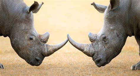 world rhino day  national  international days