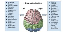 Lateralization Of Brain Function  Wikipedia. Best Dentist In Albuquerque Fha Loan Maximum. Degree In Private Investigation. About Money Market Accounts B2b It Solutions. Screen Recording Application. Chef John Folse Culinary Institute. How To Protect Your Identity From Theft. Printing Companies Seattle Cost Of Factoring. Part Time Lvn Programs In California
