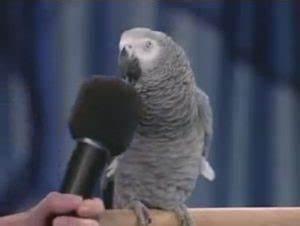 Welche Vögel Können Sprechen : 5 tipps um deinem papagei das sprechen beizubringen ~ A.2002-acura-tl-radio.info Haus und Dekorationen
