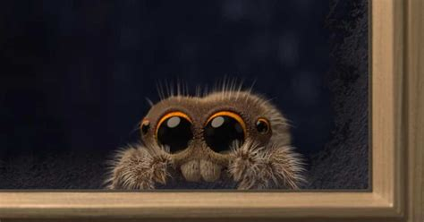 Lucas The Spider Is Back With A Video Sure To Cure Your