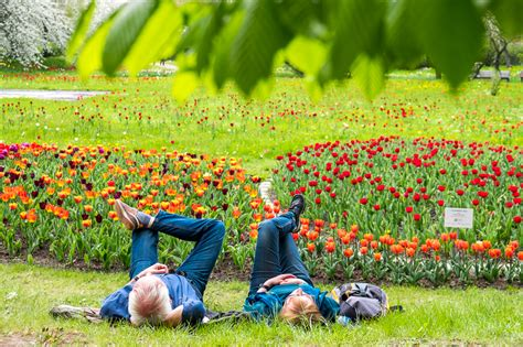 Britzer Garten Sangerhauser Weg by Tulipan In Britzer Garten Een Beetje Keukenhof In Berlijn