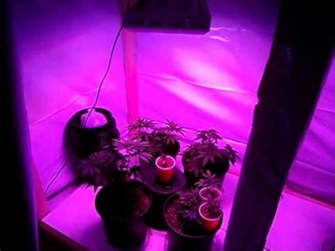 led grow light review led grow light 300w 1st review