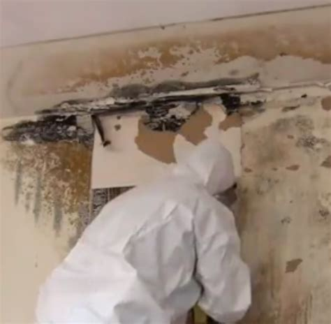 controlling mold growth   storm