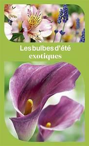 Bulbes D été : bulbes d 39 t comment les planter facilement ~ Melissatoandfro.com Idées de Décoration