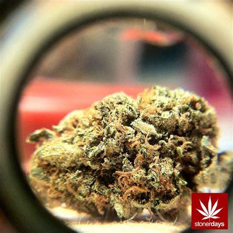 marijuana rules stoner pictures
