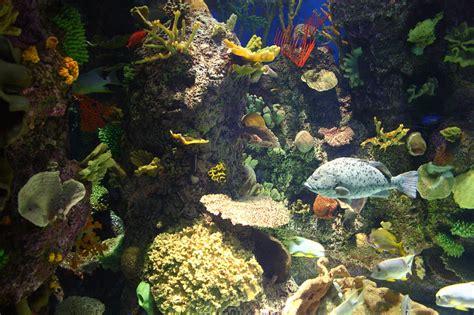 filewild reef  shedd aquarium    jpg
