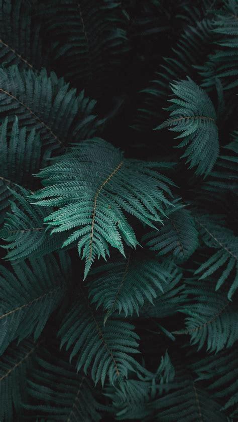 Aesthetic Olive Green Wallpaper Iphone by Fondos Fondos в 2019 г Fondo De Pantalla Tropical