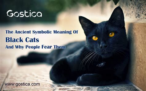 cats meaning ancient fear symbolic why them cat spiritual inevitably samhain begin putting dressing decorations halloween every homes start