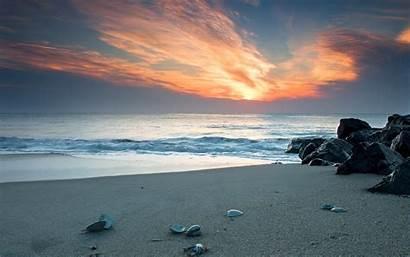 Sea Shells Sunset Beach Sand Ocean Shell