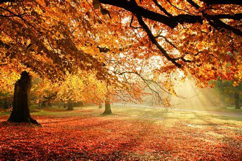 Autumn trees nature light foliage wallpaper
