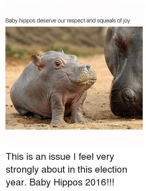 Baby Hippo Meme - funny baby hippo memes of 2016 on sizzle baby it s cold outside