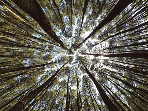 Malimbu green area proposal pengembangan wisata kawasan sempadan pantai malimbu desa : Hutan Pinus Mangunan | Foto, Lokasi, Rute, Harga Tiket, & Fasilitas