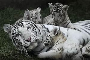 Cosa significa essere madri nel Regno Animale: storie di mamme e cuccioli