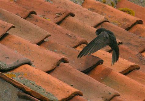 bees nest roof tiles tile design ideas