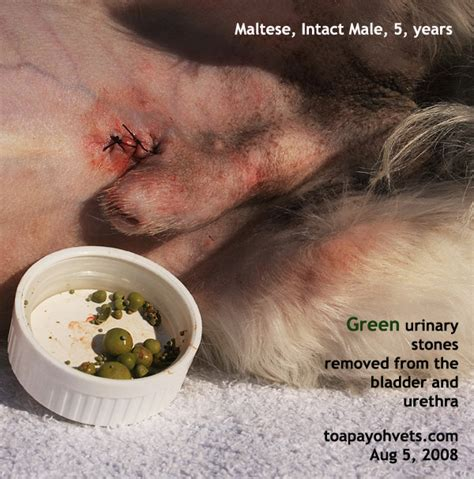 asingapore toa payoh veterinary vets dog cat rabbits
