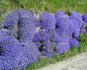 Couvre Sol Vivace : plantes couvre sol vivaces plein soleil ~ Premium-room.com Idées de Décoration