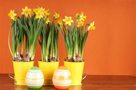 Tulpen Im Topf In Der Wohnung tulpen im topf in der wohnung hyazinthen zwiebeln im