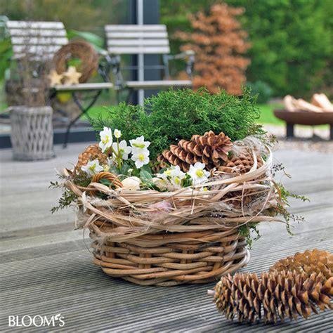 balkonkästen im winter bloom s album