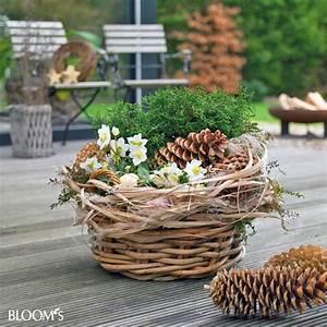 bloom39s album With feuerstelle garten mit blühende winterpflanzen balkon