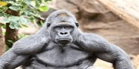 drivers   fight  lb gorilla trucking