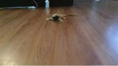 Lizard Joyreactor Floor Jaszczurka Panele Funny Cc