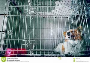 Dog In A Cage Stock Photo - Image: 46705110