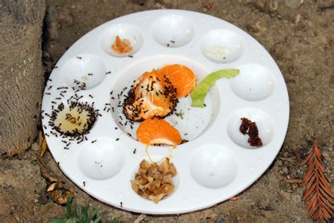 what do ants like to eat science activity for kids