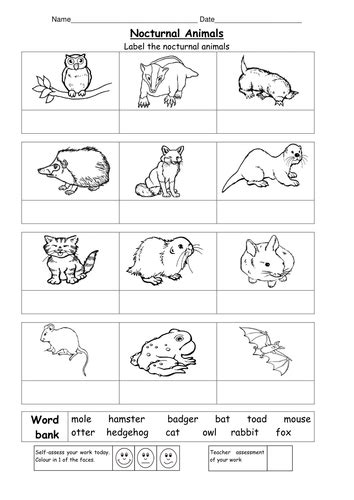 nocturnal animals  ruthbentham teaching resources tes
