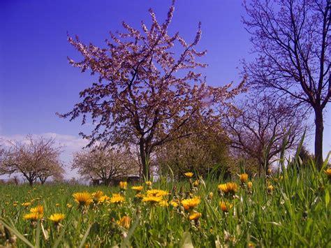 Résultat d'images pour image hiver printemps
