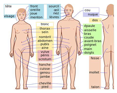 corps humain wikipedia