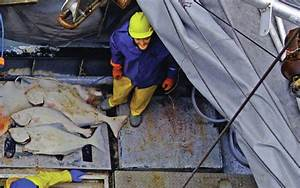 Alaska Journal | FISH FACTOR: Halibut faces headwinds as ...