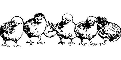 Kleurplaat Schijf Vijf by Kippenpagina Nl Kleurplaten Kippen Kuikens En Hanen