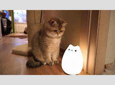 Cat Lamp & Hosico YouTube