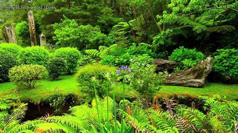 new gardens beautiful gardens new zealand youtube