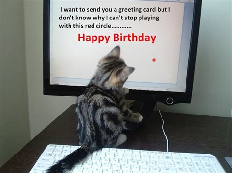 birthday greeting  kitty  happy birthday ecards