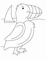 Puffin Coloring Template Seashore Atlantic Sketch Bird Puffins Printable Rock Realistic Popular Lbx Coloringhome Bestcoloringpages Templates sketch template