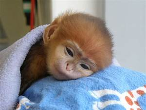 Baby Monkeys - callmeiris - Blog.