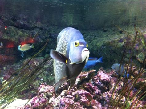 poisson en aquarium poisson en haut de l aquarium 28 images le saviez vous la m 233 moire du poisson poissons