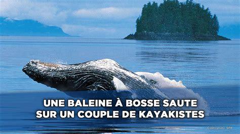 jeux de jeux de cuisine une baleine à bosse saute sur deux kayakistes 20minutes tv